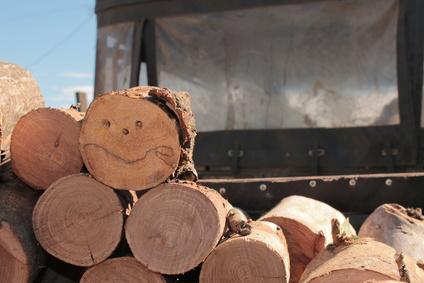 בול עץ מחייך
